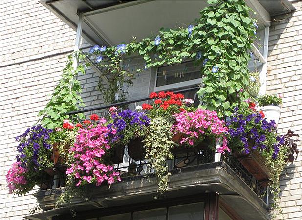 Балконът – достъпната мини-градина
