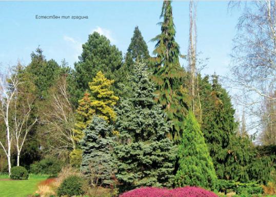 Стилове и правила в градината