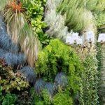 """""""Жив зелен тапет"""" покрива една от стените във вътрешния двор"""