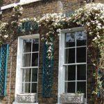 Клематисът е подходящ за украса на фасади