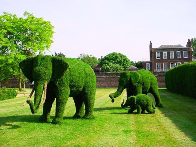 В градината ли сме или в зоопарка?