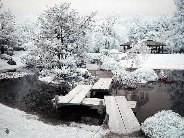 Вдъхновяващи импресии за градини и бяла зима