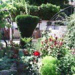 Част от градината на Светла Кърчева-Веселинова
