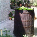 декорация в градината на Σβετλα Καρτςεβα-Βεςελινοβα