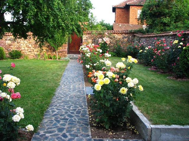 Алея с рози в двора на Симеон Айтов - с. Радотина - 2