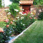 Алея с рози в двора на Симеон Айтов - с. Радотина