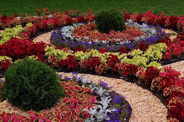 Цветя извиват спирали...