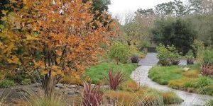Есенни грижи за красива градина догодина!