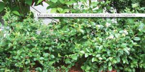Мулчиране в градината – същност и предимства