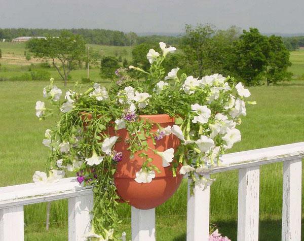 jilishta-dekorazia-garden-11