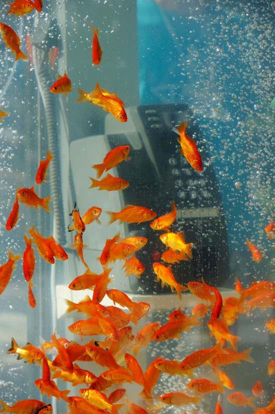 jilishta-telefonni-kabini-akvarium-1