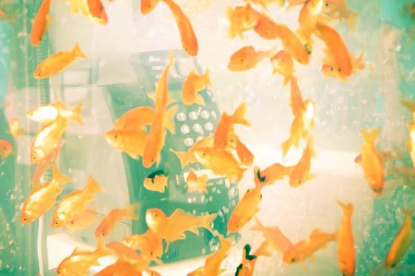 jilishta-telefonni-kabini-akvarium-5