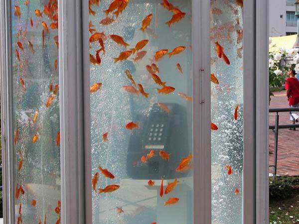 jilishta-telefonni-kabini-akvarium-6