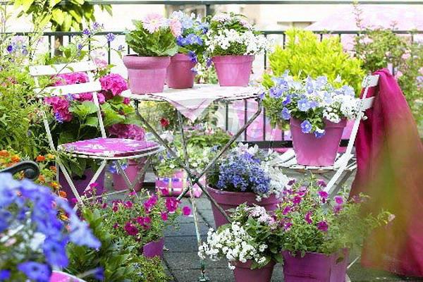 Как балконът се превърна в цветен рай...